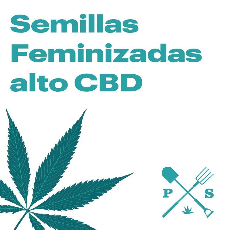 SEMILLAS FEMINIZADAS MEDICINALES ALTO CBD