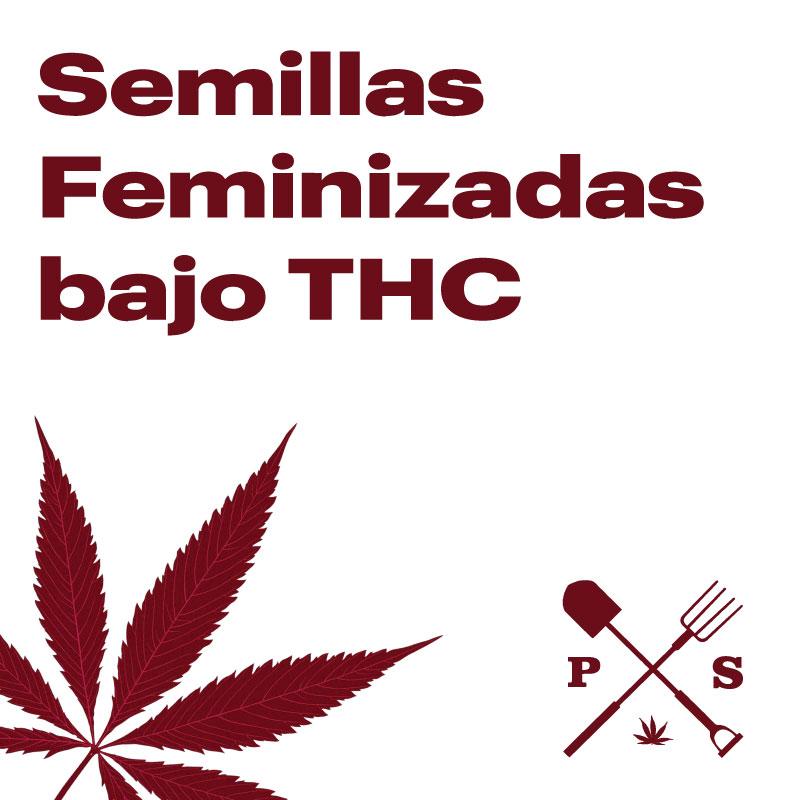 SEMILLAS FEMINIZADAS BAJO THC