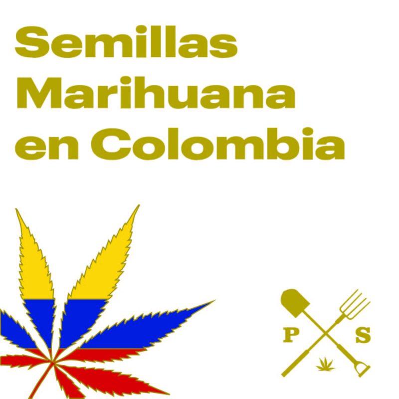 — VENTA DE SEMILLAS DE MARIHUANA EN COLOMBIA