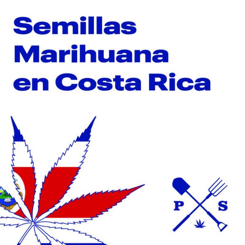 — VENTA DE SEMILLAS DE MARIHUANA EN COSTA RICA