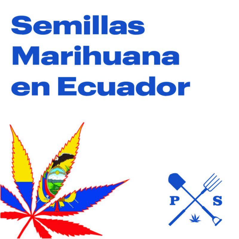 — VENTA DE SEMILLAS DE MARIHUANA EN ECUADOR