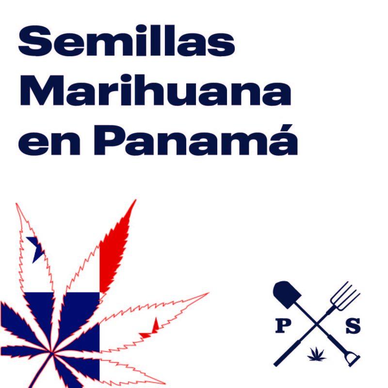 — VENTA DE SEMILLAS DE MARIHUANA EN PANAMA