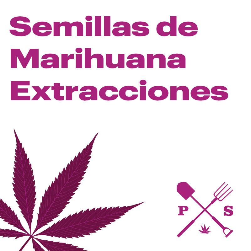 SEMILLAS DE MARIHUANA PARA EXTRACCIONES