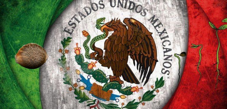 PAISA SEEDS MEXICO
